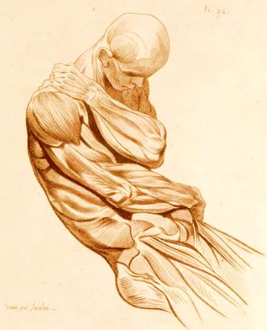 Muscle logo